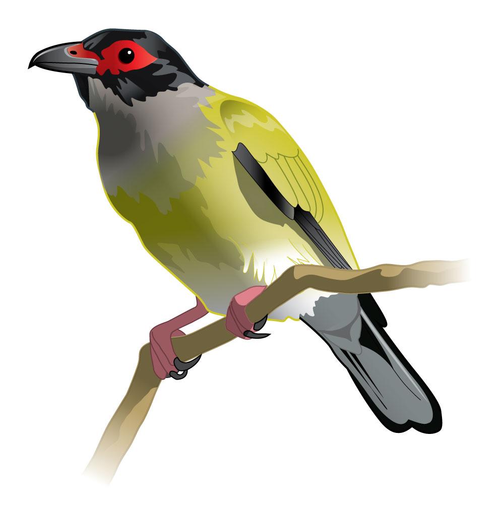 Fig-bird